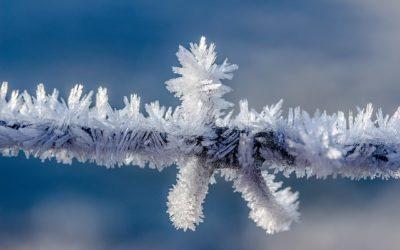 Winterzeit und Frostschäden
