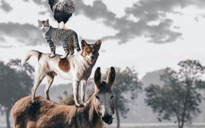 Hund, Katze, Maus – Tierhaltung und Haftpflichtversicherung